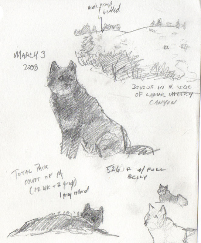 Telling The Stories Of Yellowstone Wolves
